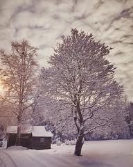 ~ the tree ~  Riddarhyttan, Sweden iPhone7 (Tankartartid) Tags: moln clouds sky himmel sol sun picsart pålandet landskap landsbygd landscape countryside natur nature vinter winter snow snö träd trees tree norden nordic västmanland riddarhyttan europe sverige sweden instagram ifttt