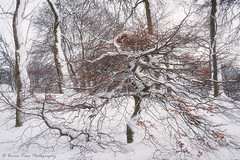 Surrounded (.Brian Kerr Photography.) Tags: scotland scottishlandscapes scottish visitscotland visitbritain landscapephotography formatthitech trees winter southlanarkshire briankerrphotography briankerrphoto snow tree landscape