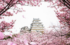 AKE_2997 copy (anekphoto) Tags: castle spring japan himeji frame travel architecture park tourism asia landmark sakura bridge kyoto red flower landscape reflection culture blossom river tourist oriental heritage cherry background white season floral building ancient history japanese beautiful design festival matsumoto fort sky old tree outdoor day pink traditional city leisure asian branch world