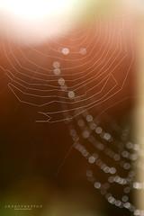 web bokeh (srepton) Tags: web spidersweb bokeh light nature nikon naturesjewels naturephotography bokehphotography