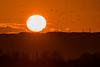 Fat Old Sun (ianbonnell) Tags: sunset billingehill sthelens merseyside