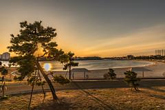 Artificial beach (dayonkaede) Tags: artificial beach landscape wood sand nature canal solar sun nikon d750 200 mm f18
