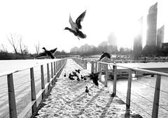 """""""Happiness is not something ready made. It comes from your own actions."""" ~Dalai Lama (Trinimusic2008 - stay blessed) Tags: trinimusic2008 judymeikle nature park lake blackwhite february 2018 winter outdoors humberbaypark toronto to ontario canada sonydschx80"""