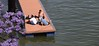 2012, 05 (Vfersal) Tags: pescadores triana sevilla andalucía españa spain centrohistórico río guadalquivir caucehistóricodelguadalquivir escenariourbano jacaranda