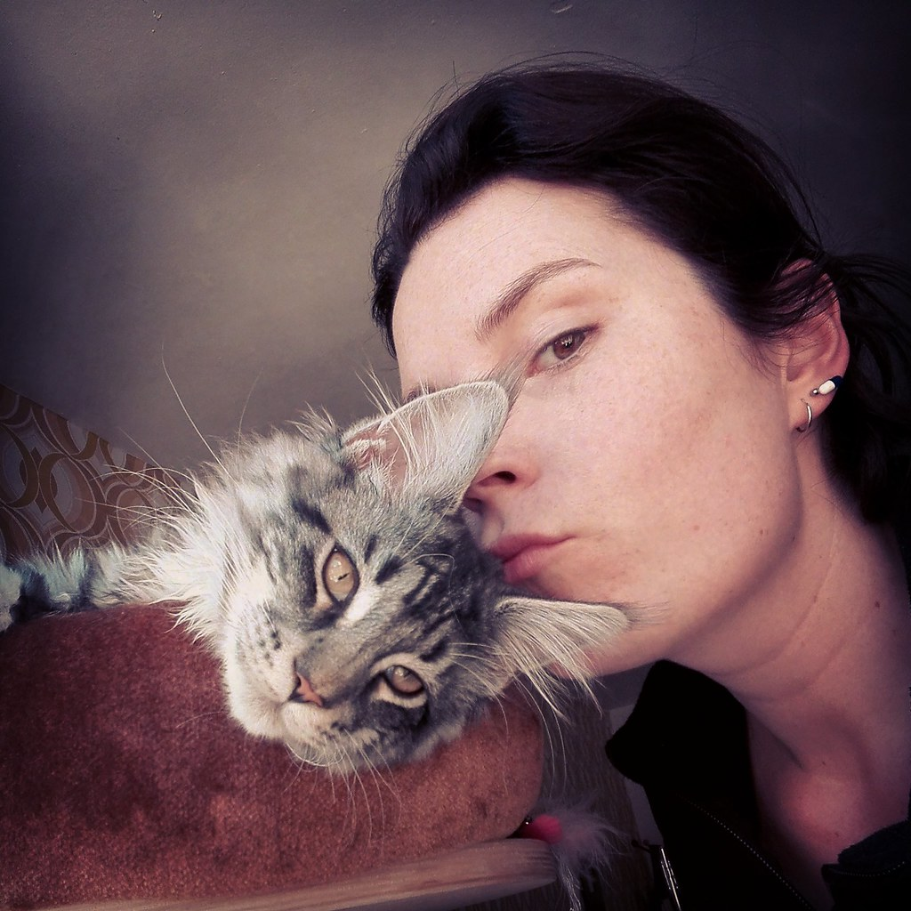The World's Best Photos of katze and mainecoon - Flickr