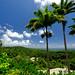 Bathsheba in Barbados