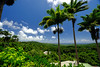 Bathsheba in Barbados (` Toshio ') Tags: toshio barbados bathsheba forest island palmtrees clouds green nature tree fujixt2 xt2 leaves travel caribbean