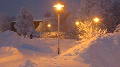 IMG_4359 (Mr Thinktank) Tags: raureif frost