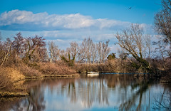 Nature scene, lake ,boat and trees. (franco nadalin) Tags: boat cormorant craft creek fishing lake lakeside landscape leisure nature outdoors pond reeds reflection river rural scene shag shore sky tranquil trees vessel view water wildlife