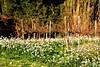Vinya d'hivern, Torrelles de Foix (Angela Llop) Tags: landart catalonia penedes torrellesdefoix barcelona vinyes
