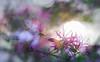 Dancing Away with the Sun (Charles Opper) Tags: canon georgia spring bokeh color doubleexposure dreamy floral flowers light mood nature sun sunset texture