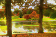 Your Table Awaits (1 of 1) (mjdrhd) Tags: fall autumn bench lake park tree nature