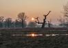 Rogalin 02-2018 #19 (Krzysztof Krr) Tags: sony a6000 nex selp18105g winter sunset tree trees rogalin rogalinek rogalińskiparkkrajobrazowy