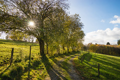Autumn Walk (politycki) Tags: landschaft landscape tree baum sunstar blendenstern natur nature clouds way sunny autumn eifelnationalpark eifel
