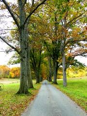 Autumn Road (Stanley Zimny (Thank You for 31 Million views)) Tags: trees road autumn fall seasond skylands park