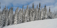 Sunpeaks Kamloops (Keith Levit) Tags: winter skiing canada kamloops britishcolumbia sunpeaks hasselbladx1d