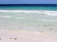 Deep Blue Sea (thomasgorman1) Tags: sea mexico seascape beach tide seaweed horizon view scenic canon
