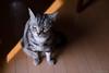 _NCL2802-Edit (chitoroid) Tags: nikond750 nikkor50mmf18g japan hokkaido sapporo cat