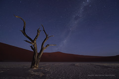 Hercules Rising - Still (Marsel van Oosten) Tags: marselvanoosten squiver africa namibia namib naukluftnp desert deadvlei sossusvlei astro astrophotography night phototour workshop dune starts milkyway dead death drought dry extreme spooky scary eery lightpainting tree camelthorn