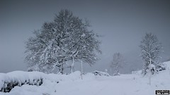 Días de nieve (Luis Cortés Zacarías) Tags: puerto ventana león asturias nieve