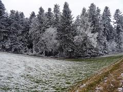 bei Eisenmoos Tägertschi Münsingen (Martinus VI) Tags: raureif hoarfrost hoar rime frimas winter hivers y170102 aaretal canton de kanton bern berne berna berner bernese schweiz suisse suiza switzerland svizzera swiss martinus6 martinus6xy martinusvi martinus