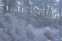 Mount Tabor (Tony Pulokas) Tags: mounttabor mttabor mounttaborpark portland oregon tilt blur bokeh forest tree maple douglasfir bigleafmaple winter snow