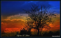 Cielo d'Inverno - Febbraio-2018 (agostinodascoli) Tags: alberi mandorlo cielo sunset panorama paesaggio colore fullcolor nikon nikkor cianciana sicilia agostinodascoli texture nature creative rosso azzurro photoshop photopainting art digitalart digitalpainting