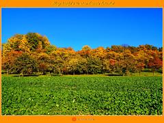 Immer wieder schön ist der Herbst in der fränkischen Schweiz/Always beautiful is the autumn franconian Switzerland/永远美丽的是秋天的法兰克瑞士/جميلة دائما هو الخريف فرانكونيان سويسرا (shaman_healing) Tags: herbst autumn landschaft landscape farben colors ehrenbürg walberla bayern bawaria himmel sky