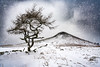 The Beast From The East (steveniceton.co.uk) Tags: winter snow beastfromtheeast storm roseberrytopping lonetree northyorkshire northeastengland northyorkmoors nationalpark