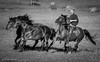 A Friend with horses (Tube Séboom) Tags: horses bw blackandwhite western cowboy sweden