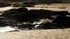 DSC_0073 (ahmed.huwait) Tags: 2017 australia greatoceanrd lorne melbourne salman beach jan