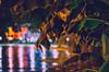 Rainy mood [C] (GR.Imágenes) Tags: nigth night nite nightout rain longexposure bokeh