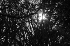 Winter Sun through a Mess of Trees and Branches (brucetopher) Tags: sunshine sunset trees woods forest vines tangle tangled mess chaos nerves texture fabric mesh