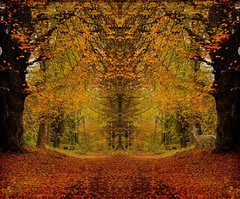 The Magic of Trees (maureen bracewell) Tags: autumn lakedistrict landscape track trees cumbria england uk leaves manipulated textured mirrored nature cannon maureenbracewell untouchabledream