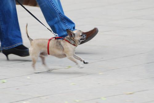Vienna dog ©  Andrey