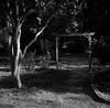 Lockeford, CA (bingley0522) Tags: rolleiflexautomatmxevs carlzeisstessar75mmf35 yellowfilter trix diafine epsonv500scanner lockeford sanjoaquinvalley ruralcalifornia smalltowns innatlockehouse autaut arbor crepemyrtle
