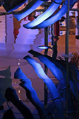 Blue Ribs (peterkelly) Tags: digital canon 6d toronto ontario canada rom royalontariomuseum bluewhale rib blue light reflection ribs skeleton northamerica