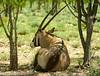 Namibia Animals -03 (Sergey V.Kozlov) Tags: sonya900 africa namibia nature etosha wildlife