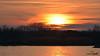 A-LUR_3927 (OrNeSsInA) Tags: nature lago trasimeno aironi cormorani