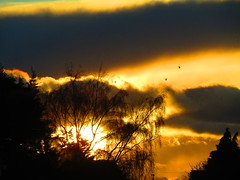 Trees In The Sunset (Gary Chatterton 4 million Views) Tags: trees birds sunset backlit nature branches sun sunshine clouds natural light canonpowershot flickr photography explore amateur