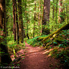 A Walk In The Park (Per@vicbcca) Tags: johndeanpark olympus ep2 victoria britishcolumbia canada forest trees paths walk