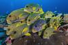 UP-close and Personal (merbert2012) Tags: westpapua indonesia papuaparadiseecoresort diving underwater underwaterphotography nature nationalpark wildlife scuba fish ocean nikond800 aquaticahousing travel fun animal rock tropical
