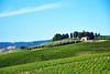 Dreaming of Tuscany ([ war horse ]) Tags: wrhs tuscany toscana italia italy vineyard wine vino vigneto