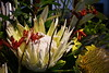 White Waratah Arrangement (Bl.Mtns.Grandma) Tags: white waratah flower arrangement cmssummerschool katoomba