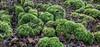 Moss Landscape... (Rainer Fritz) Tags: weissach natur forest moos wald