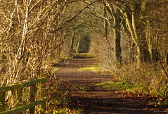 tree tunnel path  shirebrook valley (Simon Dell Photography) Tags: uk garden brown nature wildlife simon dell photography sheffield shirebrook valley views horse silhouette s12 hackenthorpe 2018