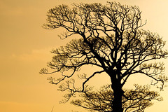 Twilight (jmiller35) Tags: outdoors park canon winter nature outdoor shapes tree golden gold glow twilight