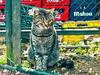"""""""Mahou"""", told the cat. (KRAMEN) Tags: felino miradafelina"""