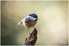 export_IMG_1013.jpg (Zi Ro) Tags: nationaalpark vogels hoge veluwe vogelhut schaarsbergen otterlo edelhert overige hogeveluwe