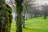 Round corner. (Omygodtom) Tags: abstract art tree dof digital d7100 diamond green outside sunshine leaf leica zeiss tamron nikkor nature nikon cherry nikon70300mmvrlens park scene scenic scenery senery usgs ngs ngc